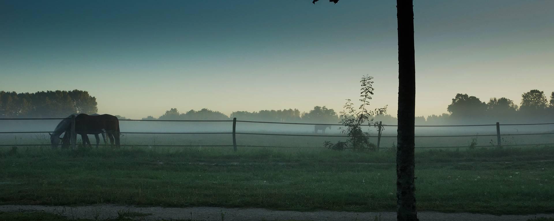 La Sologne dans la brume. © OTBC