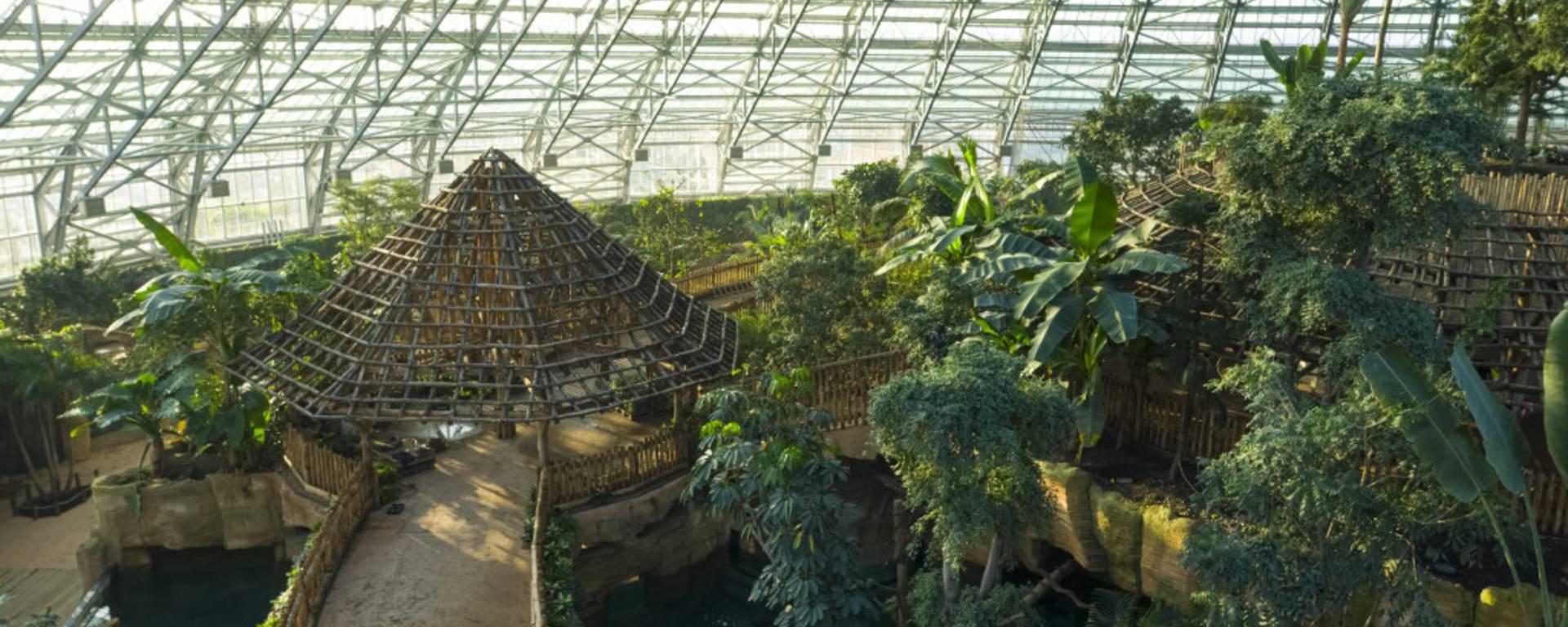 Intérieur de la serre géante du zooparc de Beauval