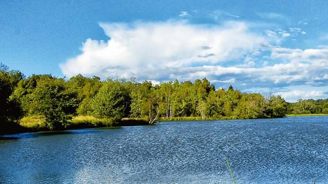 Le bassin d'esturgeons de la pisciculture Hennequart à Saint-Viâtre. © Solenska caviar de Sologne