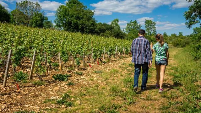 Randonnée dans les vignes à Blois-Chambord