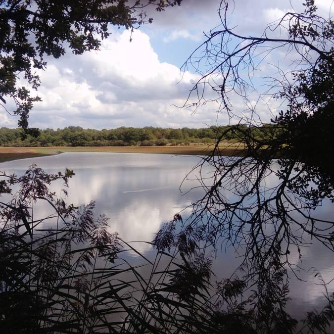 La Sologne des étangs