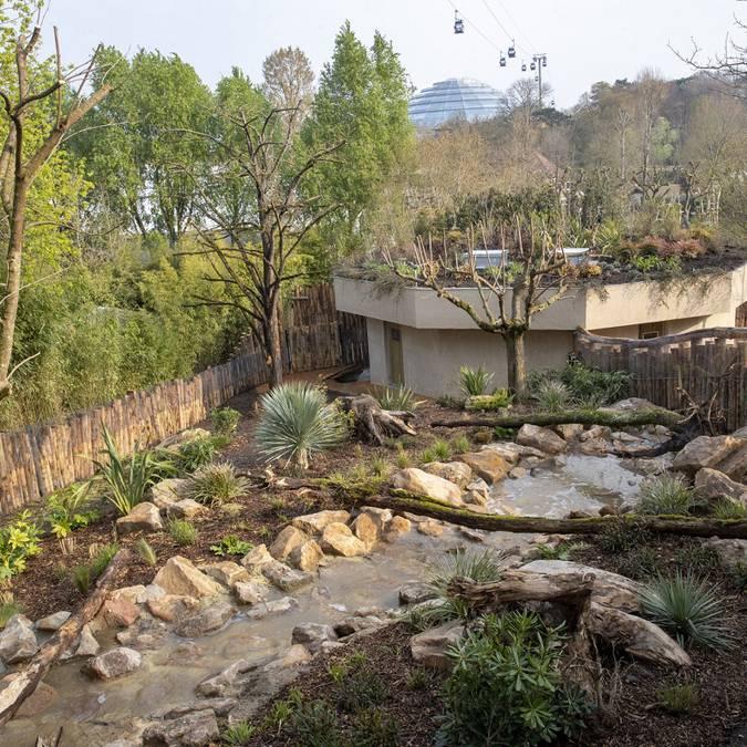 Le parc des diables de Tasmanie au ZooParc de Beauval. © ZooParc de Beauval